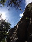 Rock Climbing Photo: Whomped Willow