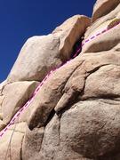 Rock Climbing Photo: head for the bush