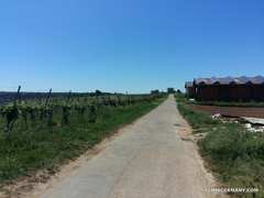 Rock Climbing Photo: This road takes you through local vineyards direct...