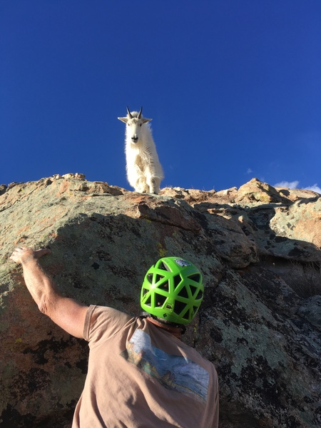Mountain goat on pitch 5.