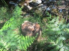 Rock Climbing Photo: young Roe Deer