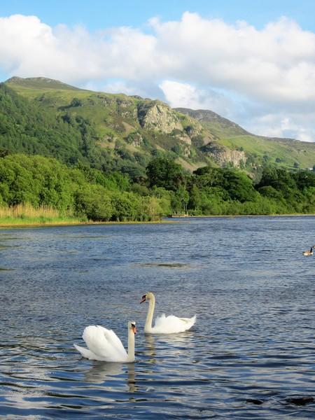 Rock Climbing Photo: Swans