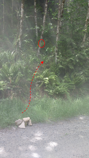 "The cairn of rocks placed on the road on June 6, 2017. The ""overgrown forest road"" is very overgrown. The first lime green ribbon on the trail is circled. Follow the arrow to begin the hike."