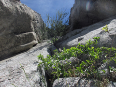 Rock Climbing Photo: Brushy, rotten, low angle crack to the tree. Fortu...