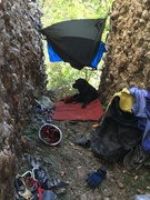 Rock Climbing Photo: Lucy on her perch catching some shade on one of th...