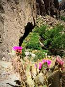 Rock Climbing Photo: Cactus bloom above Eldorado Roof