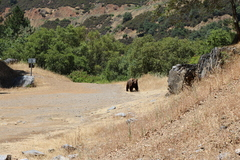 Bear visited us on June 10, 2017.  About 2 dozen people watched in in shock or complete indifference as they took pictures and videos from their phone.