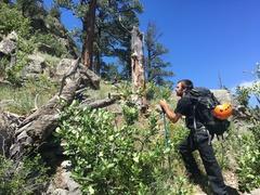 Rock Climbing Photo: Approach to broken tree