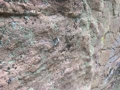 Rock Climbing Photo: New glue-in.