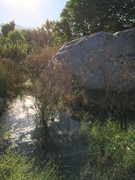 Visiting Bakersfield, saw this boulder was only 15 minutes away from my parents house. The Kern River is so high right now, the base of the rock is underwater.