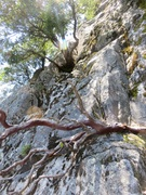 Rock Climbing Photo: On the approach to the base of the route. Go this ...