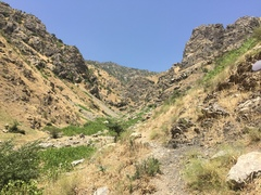 Looking up the gulley - back to the road.  Site is on the right hand side.