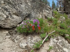 Rock Climbing Photo: At about 6500-7000 feet, the wildflowers were real...