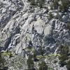 Juniper Wall