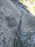 Rock Climbing Photo: Top of Pitch 9, 11a/C1. Excellent climbing on this...
