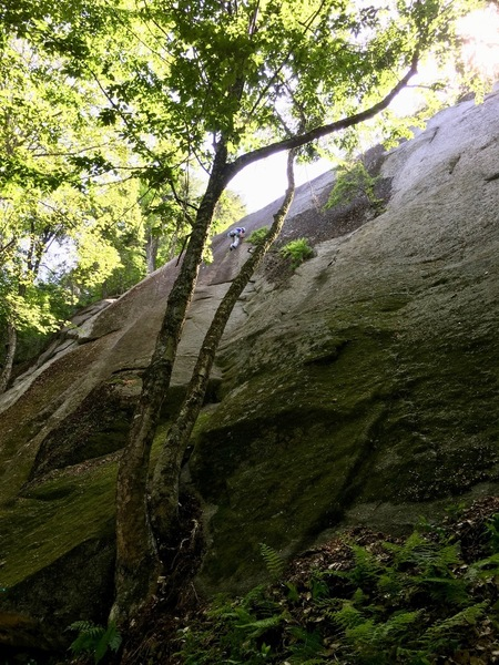"""Rock Climbing Photo: Trees at START of """"Somebody's Got To Do It&qu..."""