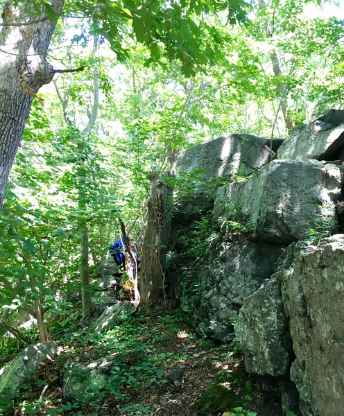 Approaching the boulder -- Ed is hidden behind the tree trunk.
