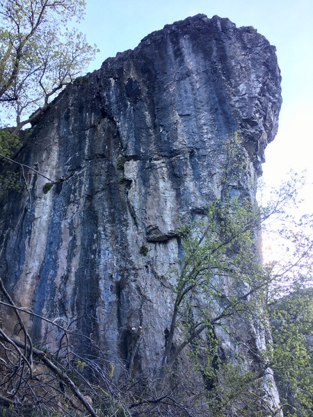 Rock Climbing Photo: Start in front of tree. Head up to grey streaks