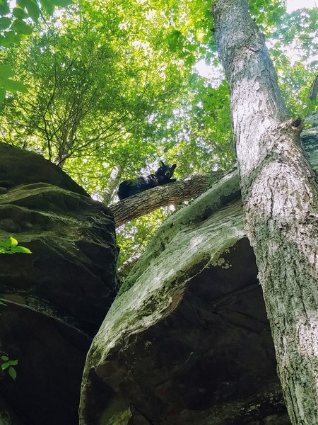 Belay visited by a friendly bear looking to hang out.