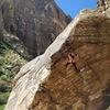 black velvet canyon
