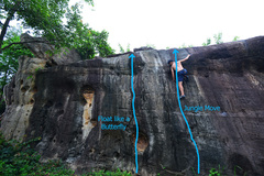 Rock Climbing Photo: Topo for 'Jungle Move' and 'Float like a butterfly...