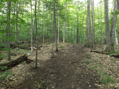 Rock Climbing Photo: The correct approach trail turns left at, the book...