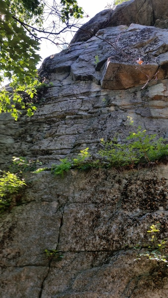 The whole pitch of As the Cliff Turns.  It may appear licheny and vegetated, but it's got lots of high-quality climbing!