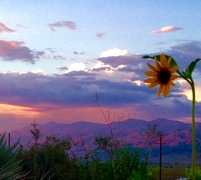 Owens Valley sunsets & sunflowers!