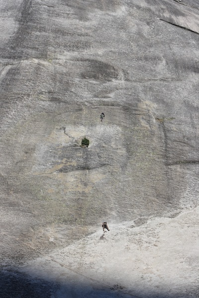 Climbers on Zee Tree