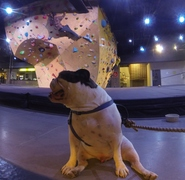 Rock Climbing Photo: Bouldering at Whitney Peak with my dog Dexter