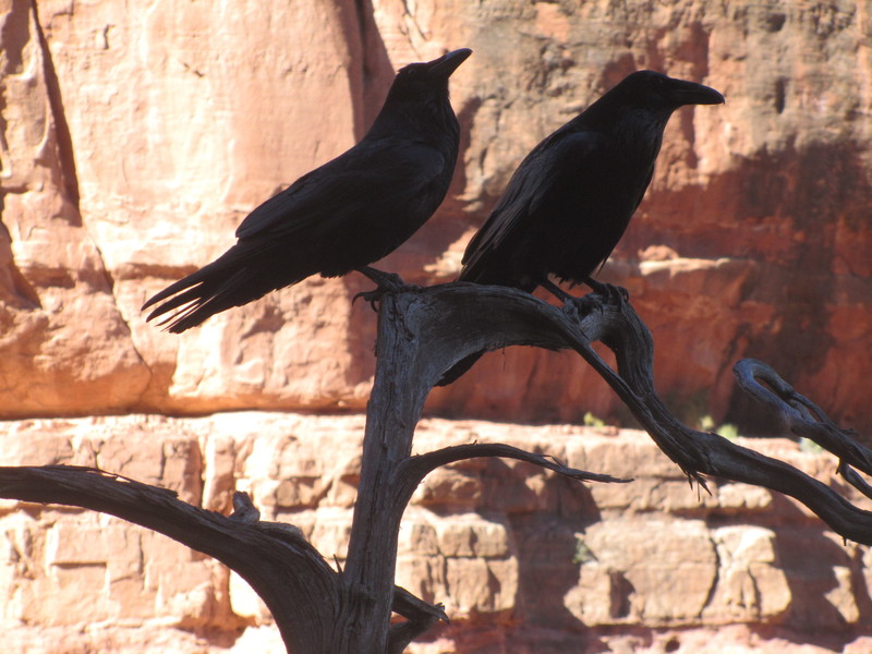 Rock Climbing Photo: Vortex Ravens