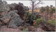 Rock Climbing Photo: Motivational Creeper.