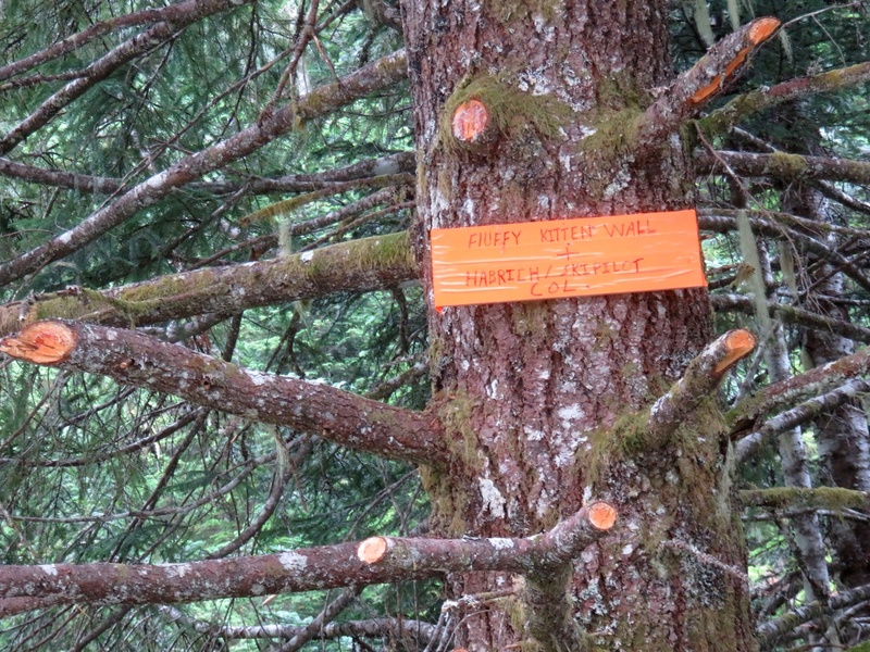Sign for Fluffy Kitten Wall on tree near parking spot on road.