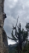 Rock Climbing Photo: Sage with a high foot on the upper crux.