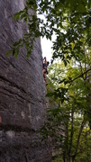 Rock Climbing Photo: Typical Hailes Cliff route starts in the trees and...