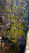 Rock Climbing Photo: Dark Star Neon Lichen!!