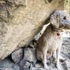 The pups name is Baja