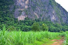 Rock Climbing Photo: The dirt road to Shangri-La wall (white)