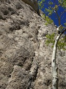 Rock Climbing Photo: Looking up on Dynamitic