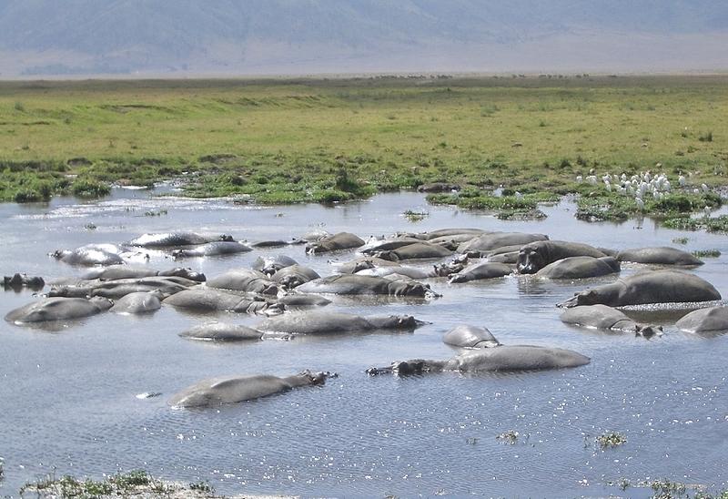 Rock Climbing Photo: Ngorongoro crater safari