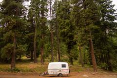 Camp Scamp...