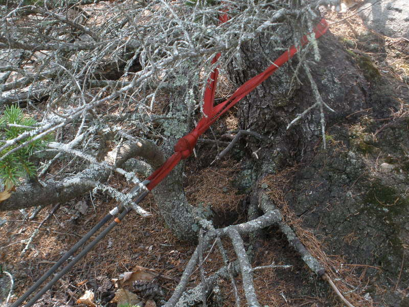 Fixed webbing anchor we found on the tree about 80 ft below the big pine tree.