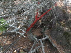 Rock Climbing Photo: Fixed webbing anchor we found on the tree about 80...