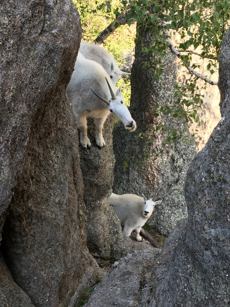 Inquisitive locals crowding the belay.