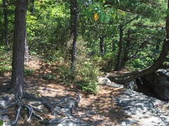 Rock Climbing Photo: For TR the two trees on the left are going to be y...