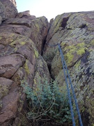 Rock Climbing Photo: The bush you have to climb through and the crux cr...