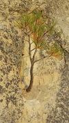 Rock Climbing Photo: Go easy on the plants.