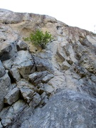 Rock Climbing Photo: World's Toughest Milkman climbs up to the bush and...