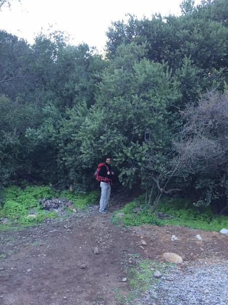 Trail heading toward El Arrayán