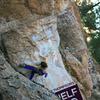 Tiny climber found behind huge pinon.